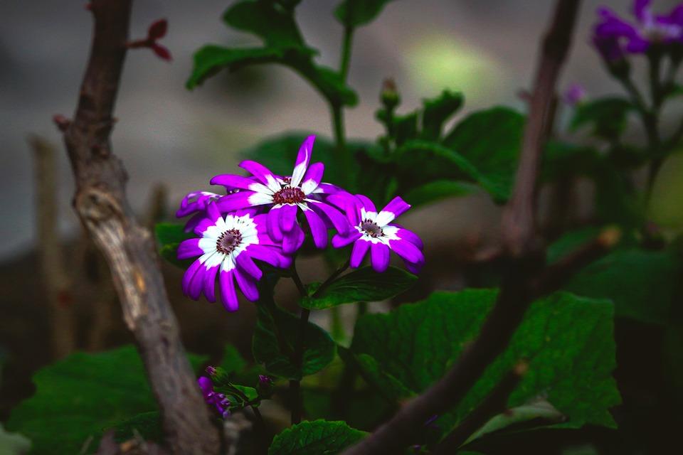 Flower, Purple, White, Nature, Spring, Flora, Blue