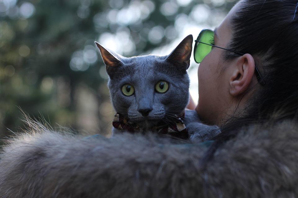 Cat, Pet, Pets, Bowtie, Blue, Russian, Girl, Love