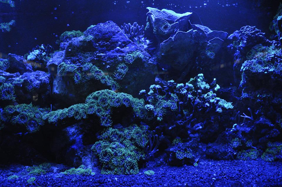 Coral Reef, Sea, Blue, Water, Aquarium, Underwater