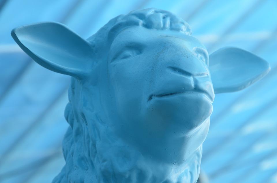 Blue Sheep, Sheep, Blue, Animal, Wool, Scheeren