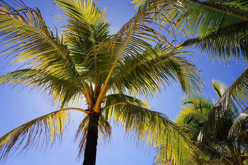 Palms, Blue Sky, Beach, Island, Summer, Resort
