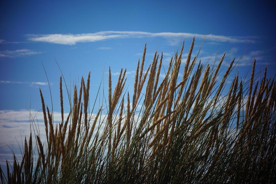 Nature, Sky, Blue, Beach, Blue Sky