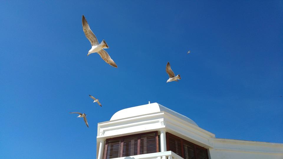 Cadiz, Seagulls, Blue Sky