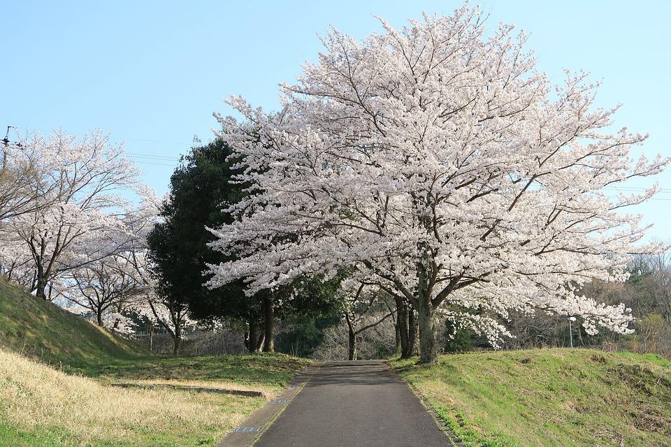 Wood, Landscape, Seasonal, Natural, Park, Blue Sky
