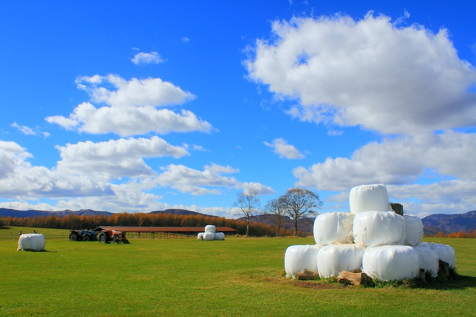 Blue Sky, Pasture, Ranch, Grass, Shinshu, Tractor