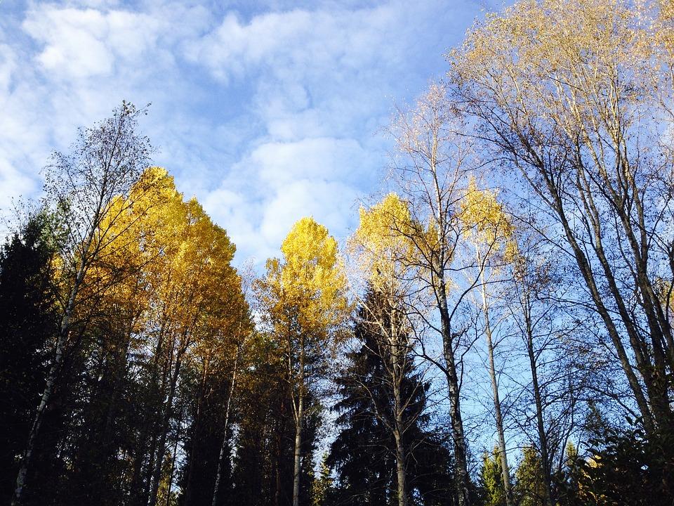 Autumn, Fall Colors, Blue Sky, Tree, Deciduous Trees