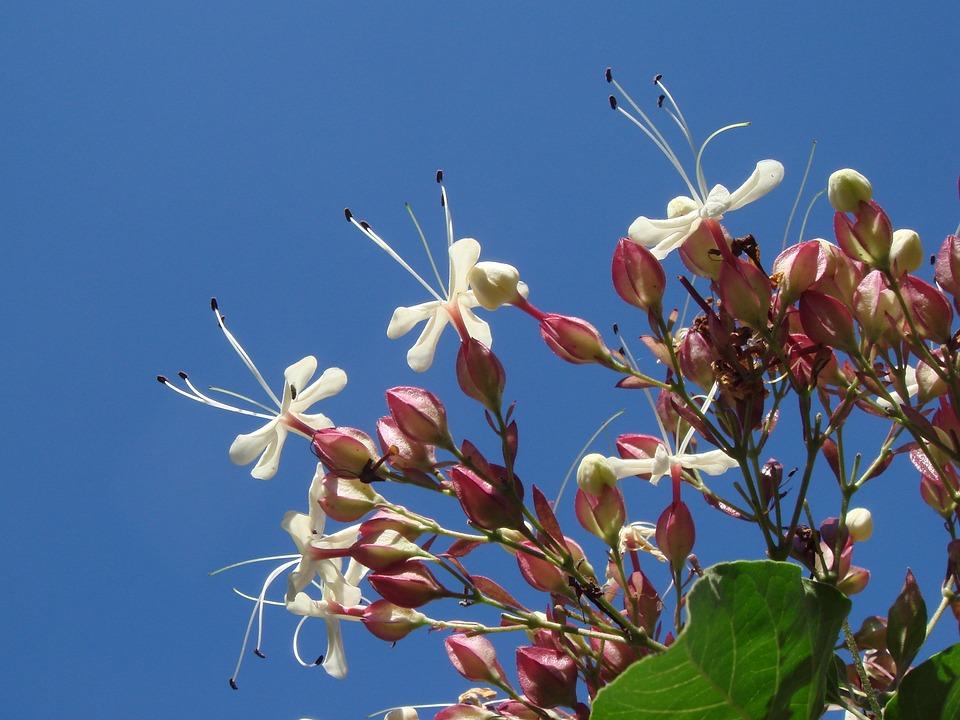 Flower, White, Garden, Tree, Plants, Summer, Blue Sky