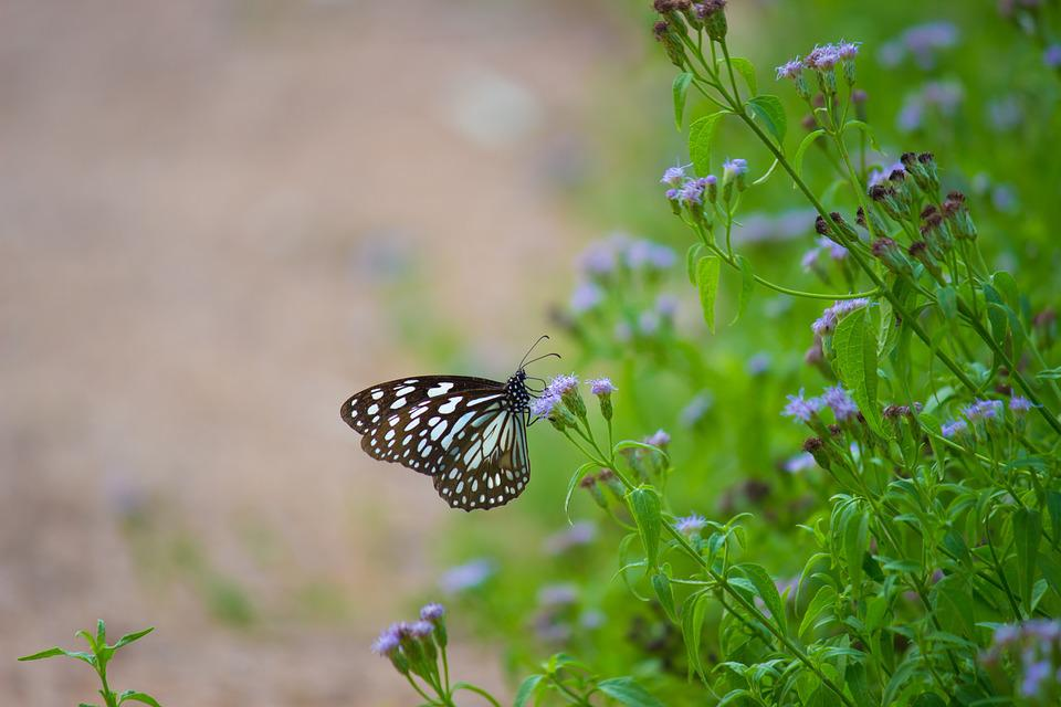 Butterfly, Blue Spotted Butterfly, Nature, Wildlife