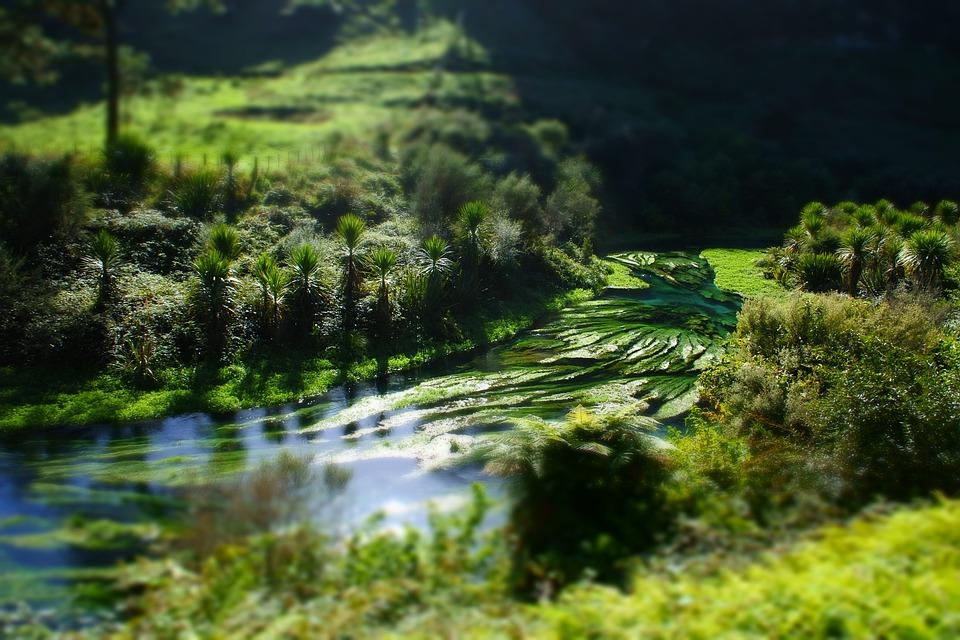 New Zealand, Landscape, Blue Springs, Model Effect