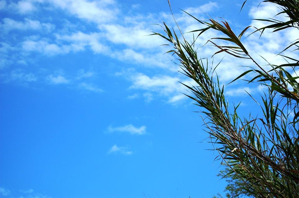 Sky, Plant, Blue, Summer, Cloud, Breeze
