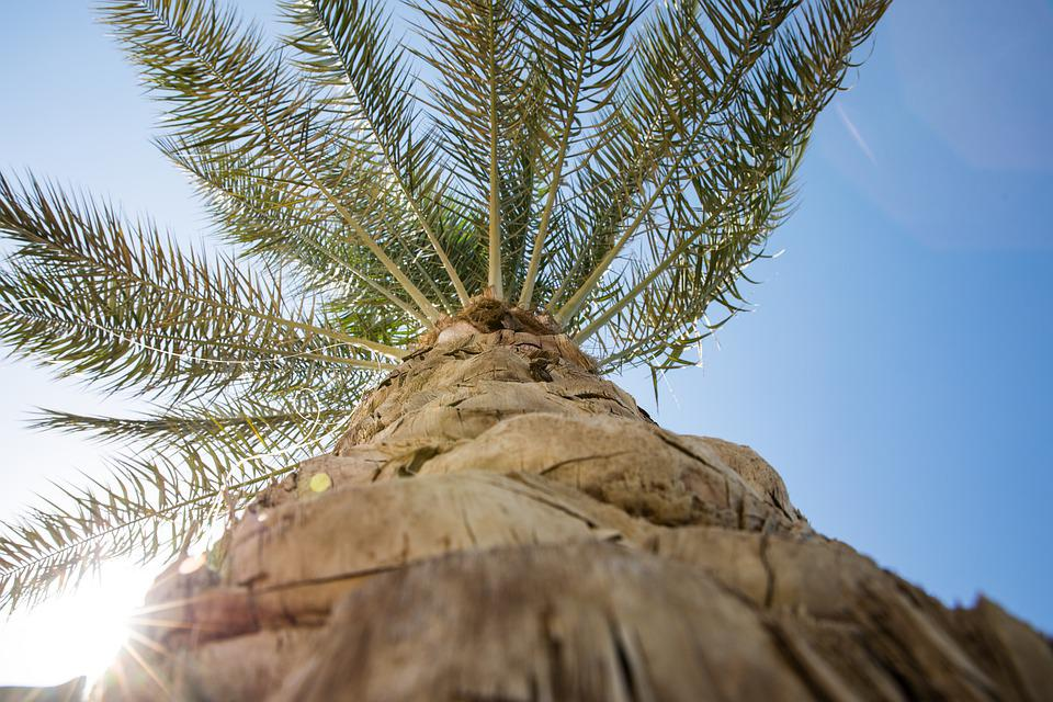 Palm Tree, Sky, Sun, Relax, Palm, Summer, Nature, Blue