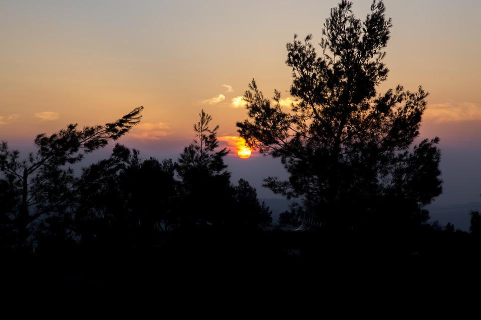 Sunset, Sky, Tree, Blue, Sun, Nature, Summer, Yellow