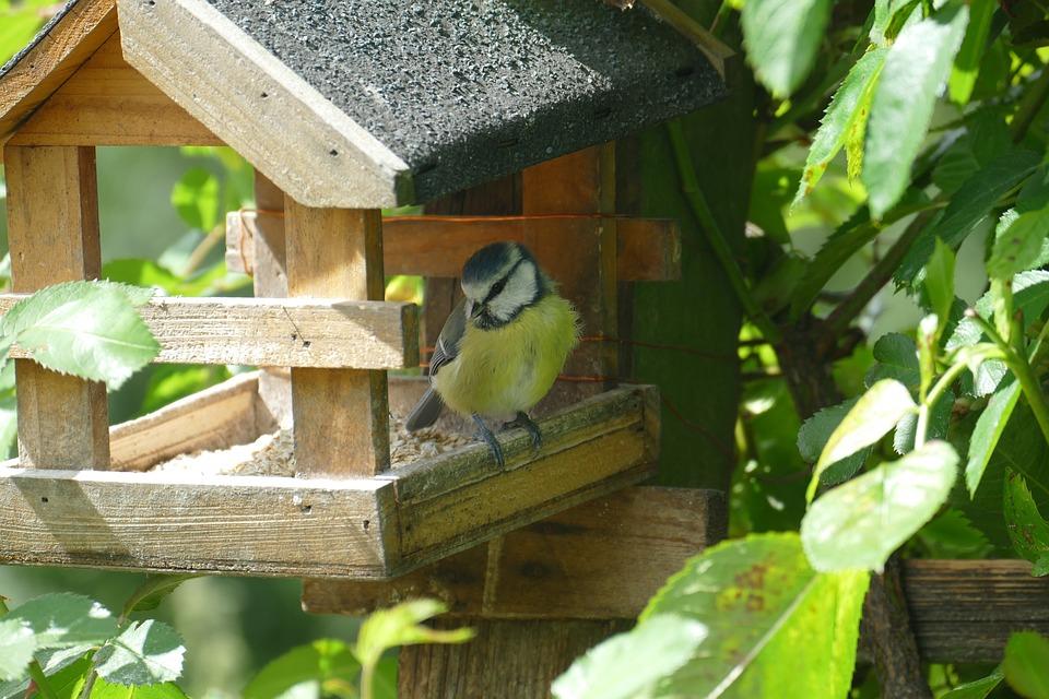 Bird, Blue Tit, Close Up, Aviary, Feed, Food, Watch
