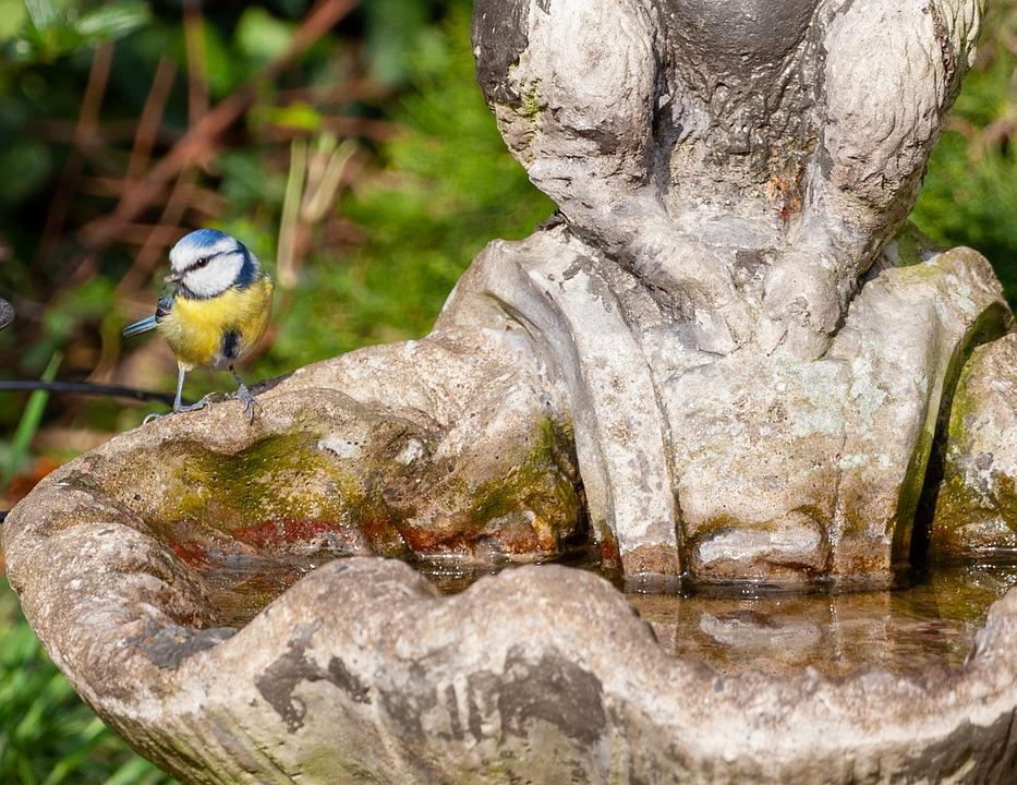 Blue Tit On Bird Bath, Statue, Water, Blue Tit, Tit