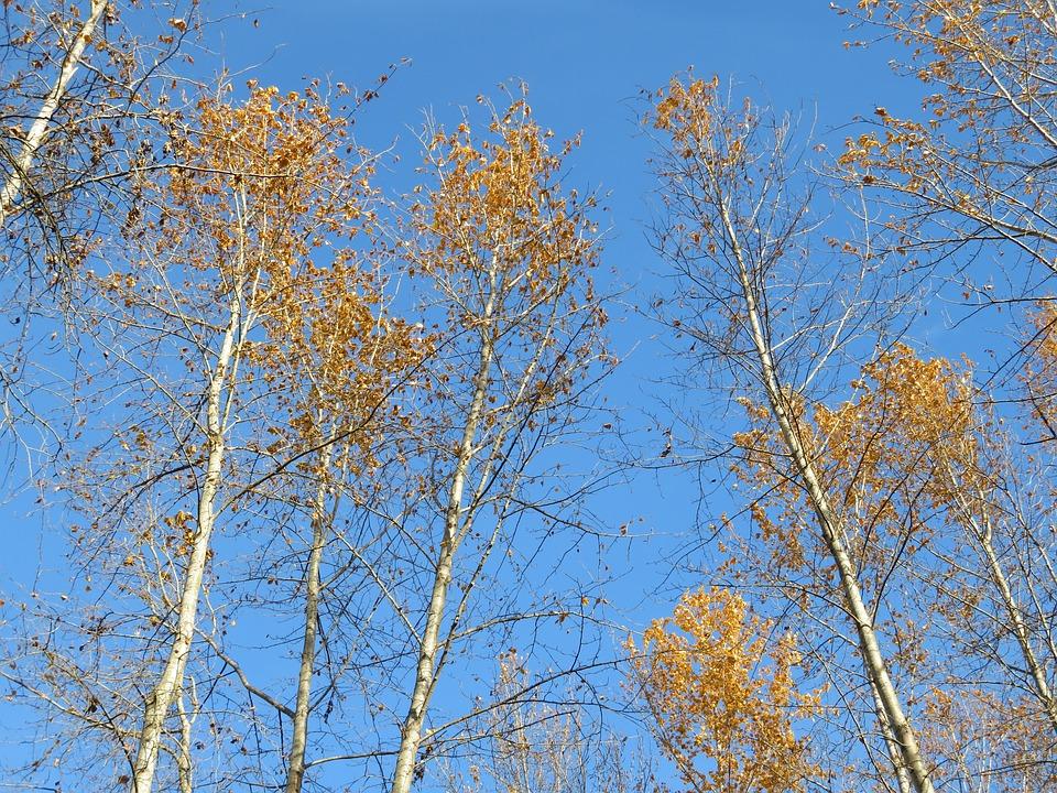 Tree, Branch, Season, Wood, Nature, Sky, Blue