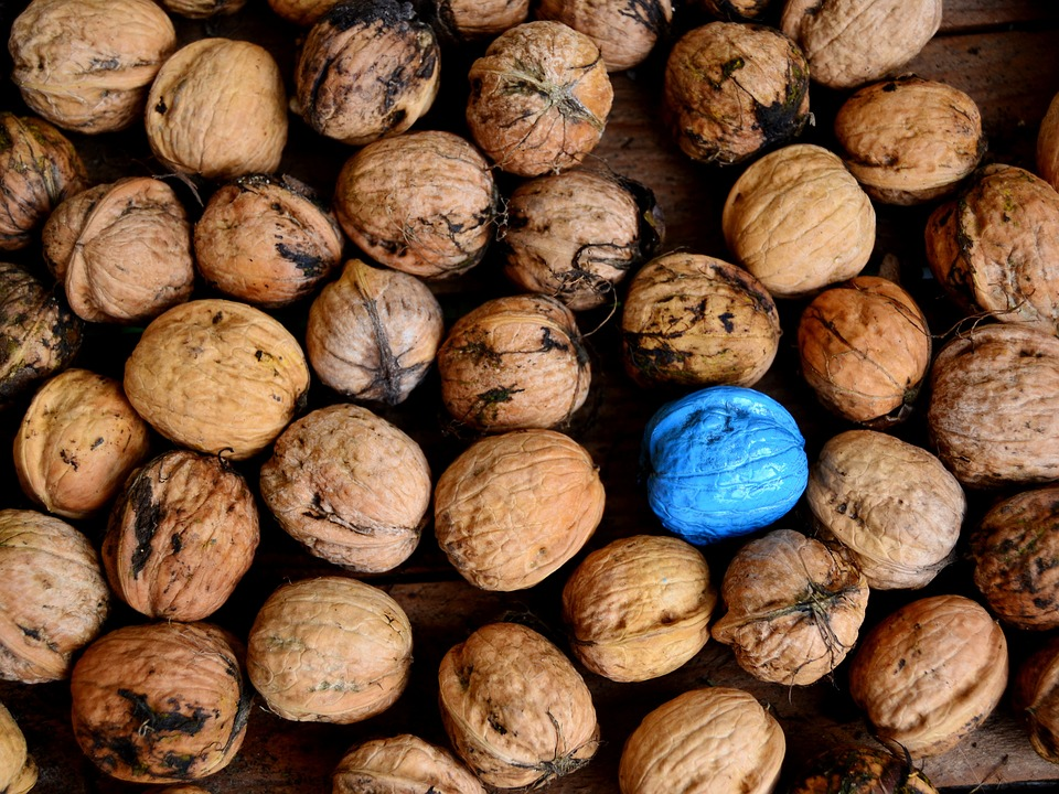 Nuts, Blue, Turquoise, Diversity