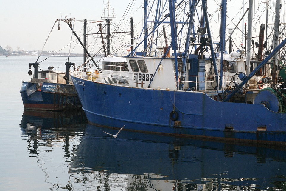 Boat, Fishing, Blue, Sea, Gull, Vessel, Commercial