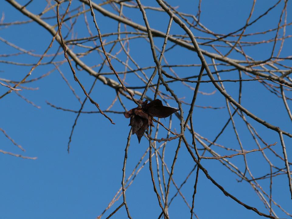 Branch, Winter, Foliage, Blue, Sky, Butterfly, Nature