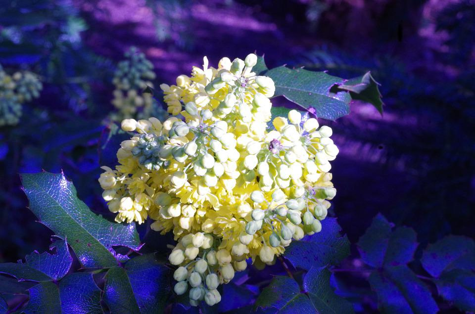 Flowers, Spring, Yellow, Blue, Prickly, Flower Grape
