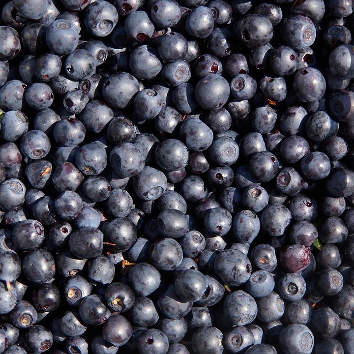 Blueberry, Wild Berry, Berry Picking