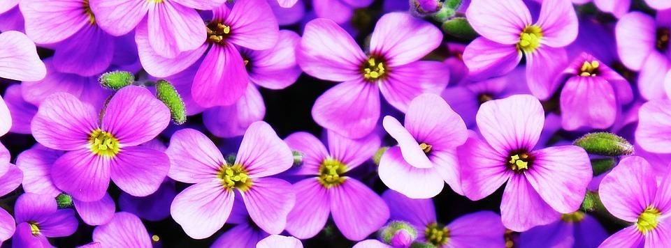 Flowers, Purple, Blütenmeer, Purple Flower, Flower