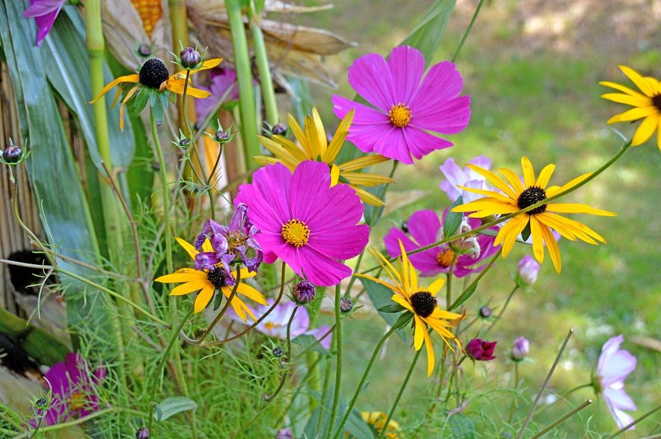 Blumen, Blumenwiese, Bunt, Wildblumen, Wildflowers