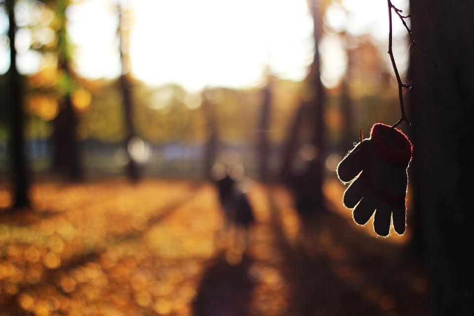 Autumn, Blur, Close-up, Color, Fall, Focus, Glove