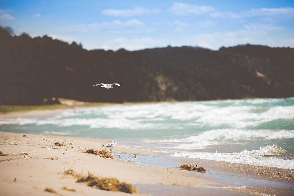 Avian, Beach, Birds, Blur, Coast, Flight, Flying