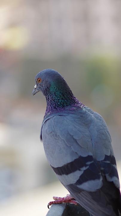 Bird, Bird Looking, Blur, Blurred, Blurred Background