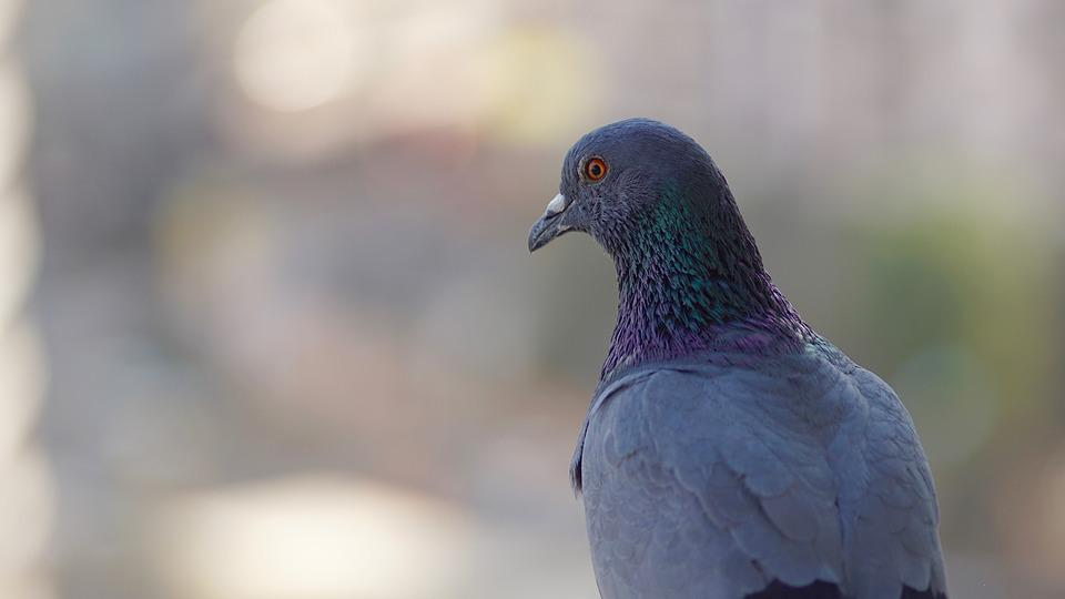 Bird, Bird Looking, Blur, Blurred, Blurred Background