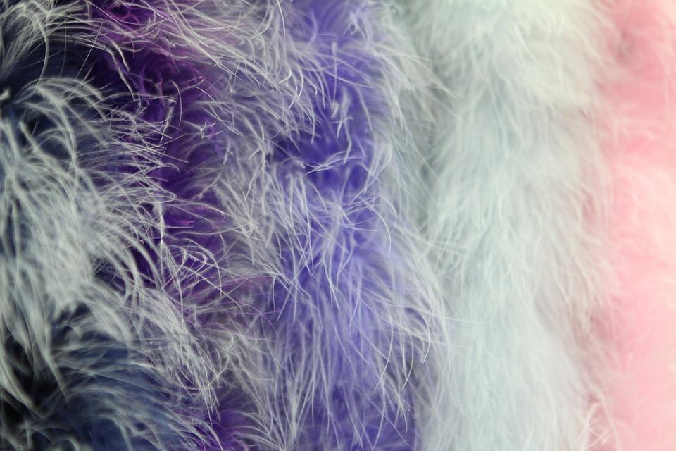 Background, Boa, Feathers, Closeup, Macro, Pen, Texture