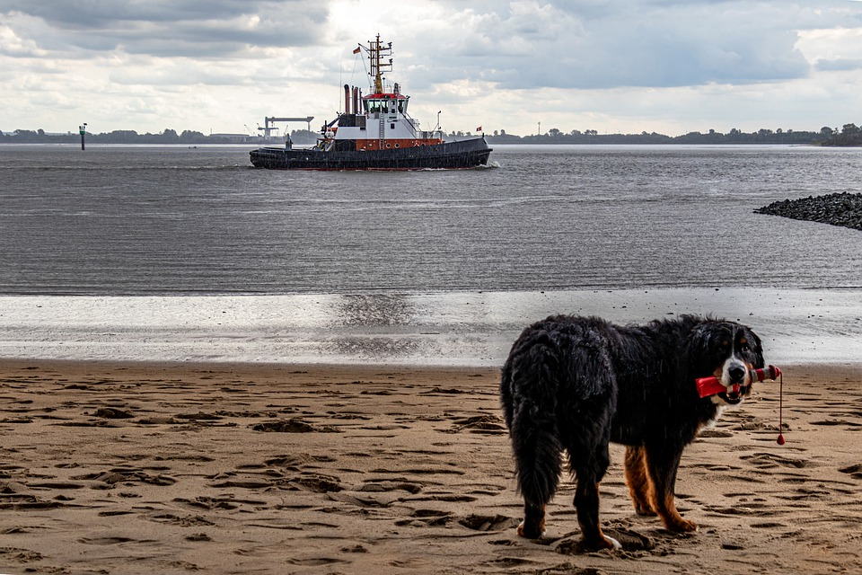 Beach, Elbe, Dog, Cutter, Boat, Hamburg, Port