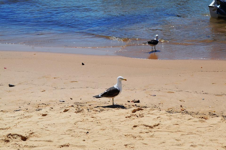 Beach, Mar, Beira Mar, Nature, Sand, Bird, Waves, Boat