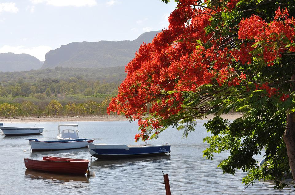 Nature, Body Of Water, Tree, Boats, Flamboyant, Sea