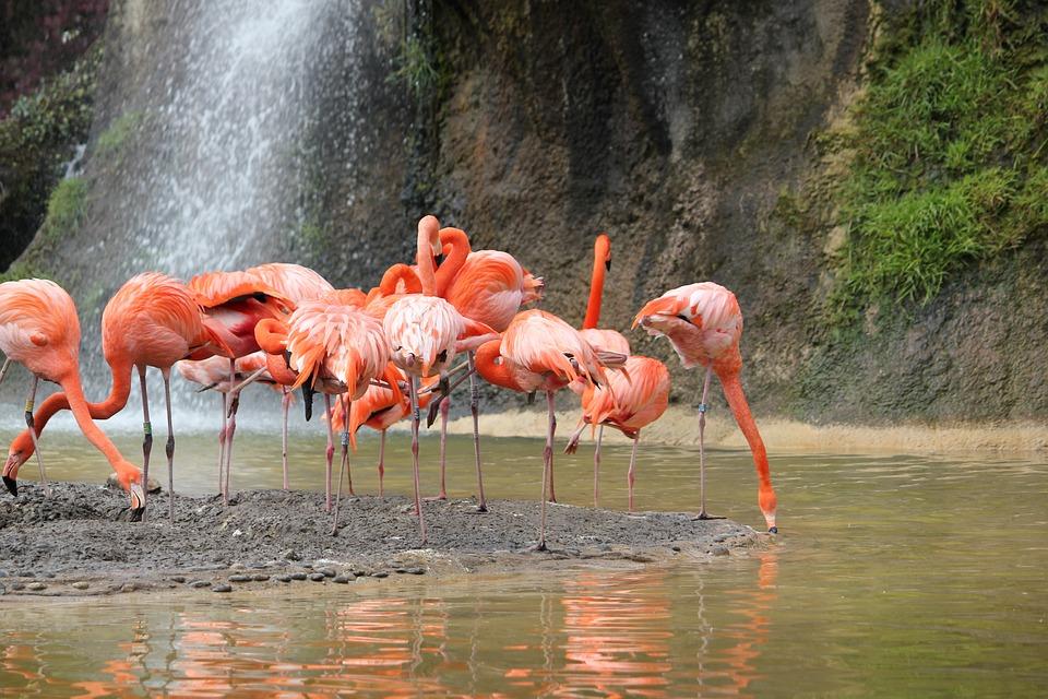 Pink Flamingo, Bird, Body Of Water, Nature, Fauna