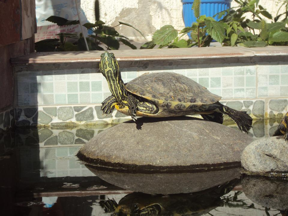 Body Of Water, Old, Stone, Turtle