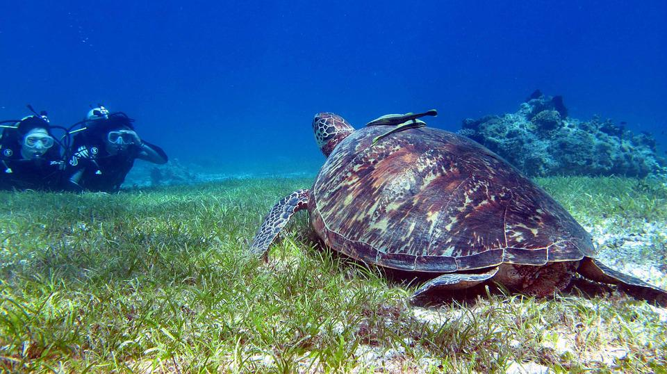 Bohol Travel, Philippines Travel, Turtle
