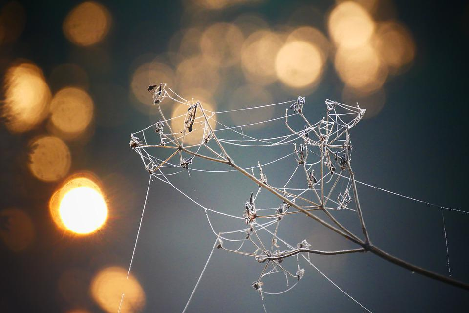 Spider, Cobweb, Bokeh, Background, Wallpaper, Landscape