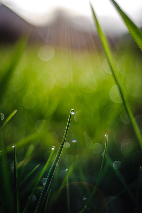 Drop Of Water, Grass, Bokeh, Background, Close Up