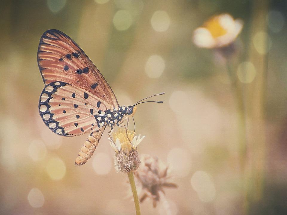 Butterfly, Colors, Bokeh