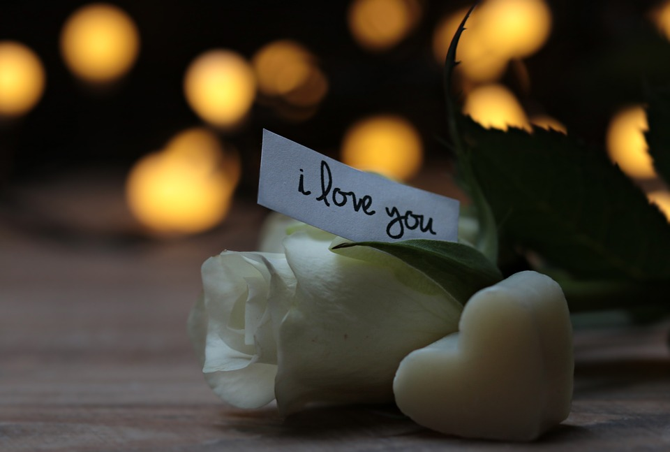 Rose, Bokeh, Heart, Love Message, I Love You