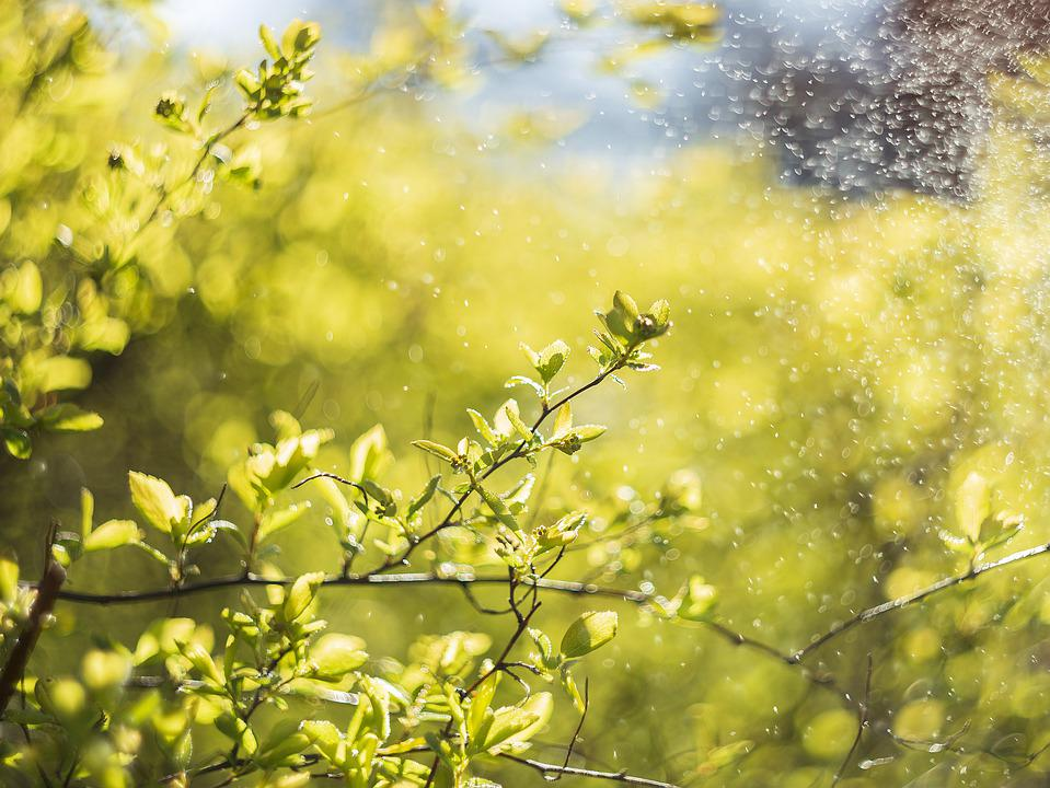 Tree, Green, Plant, Drops, Bloom, Bokeh, Bright, Branch