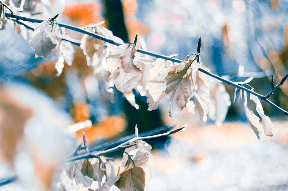 Leaf, Plant, Nature, Blur, Bokeh