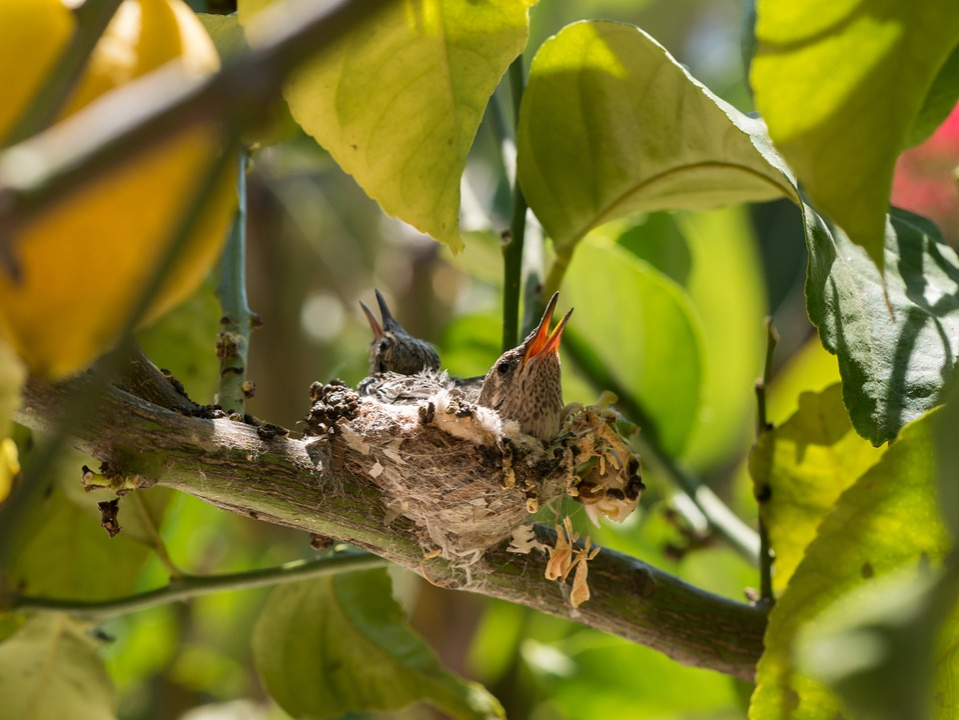 Baby, Bird, Tree, Green, Bokeh