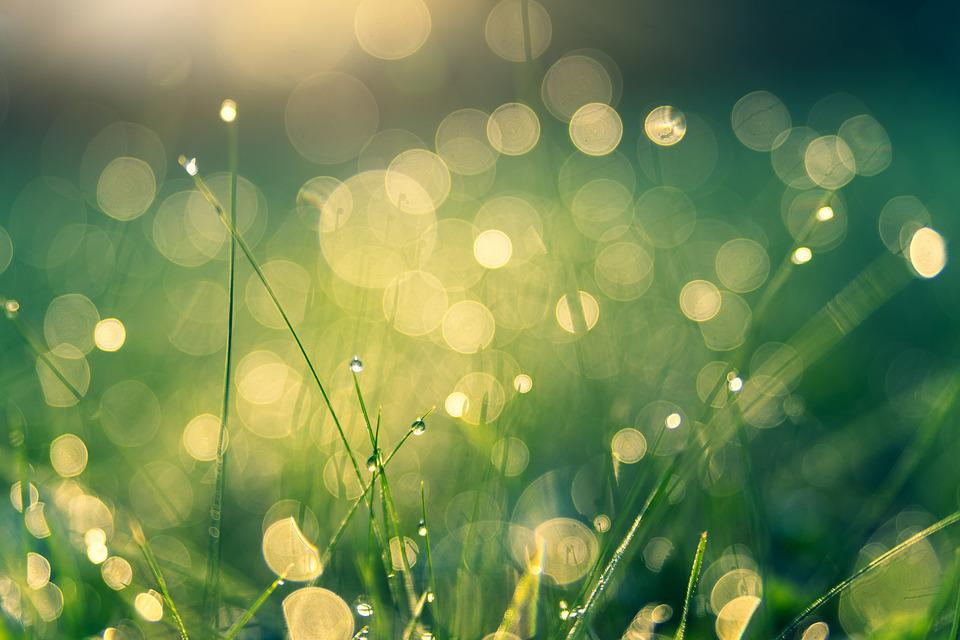 Meadow, Bokeh, Nature, Dew, Dewdrop, Drip, Water, Macro