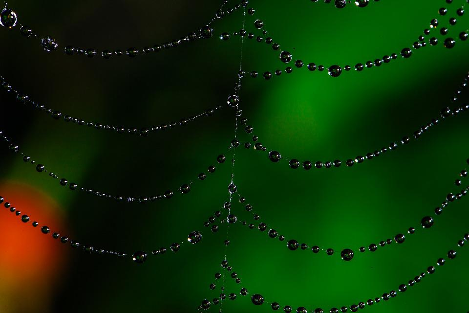 Spider Web, Bokeh, Dew, Web, Nature, Spider, Insect