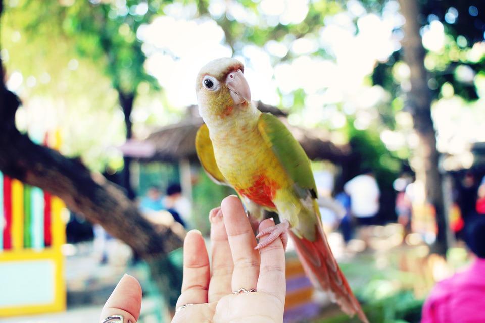 Hand, Bird, Animal, Nature, Dove, Wildlife, Bokeh