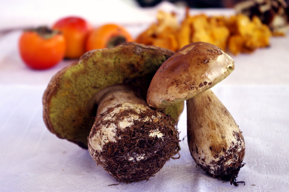 Porcini Mushrooms, Boletus Edulis, Mushrooms