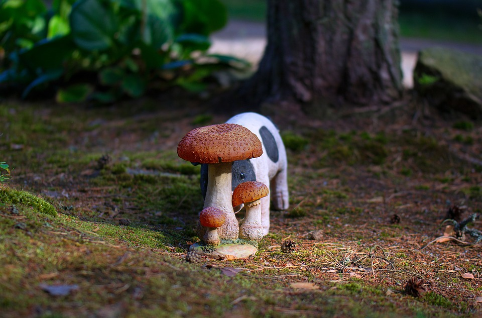 Boletus, Mushroom, Piggy, The Pig, Hiding, The Shy