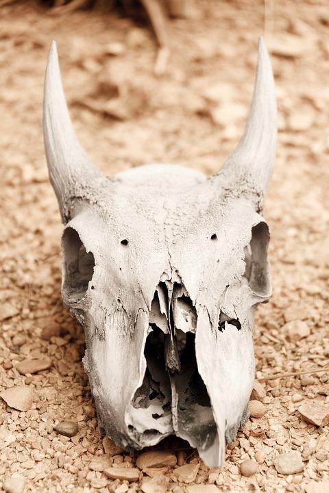 Animal Skull, Arid, Bone, Dead, Death, Decay, Desert